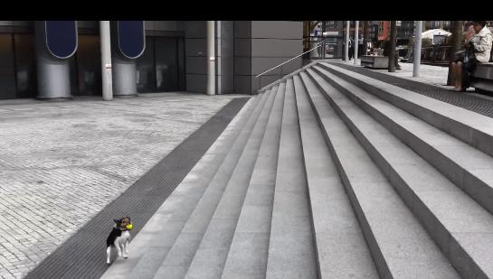 犬 ボール3