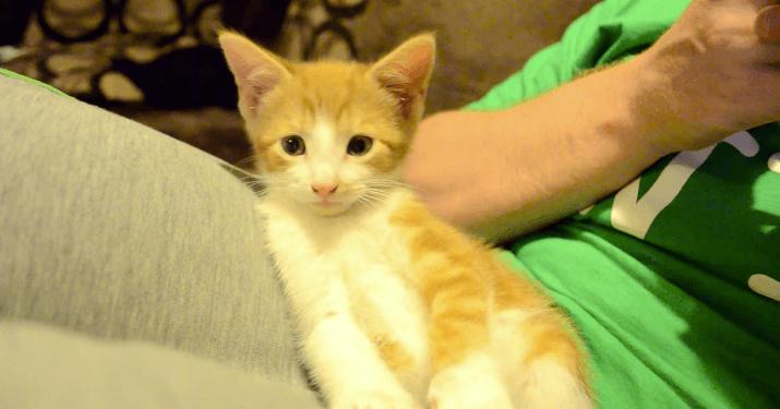猫 ウトウト1