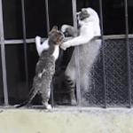 【感動】これがお母さんの優しさ!家に入れない子猫を全身で助け出す