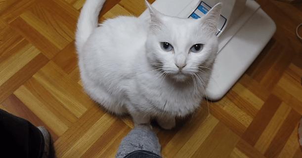 猫 足踏み1