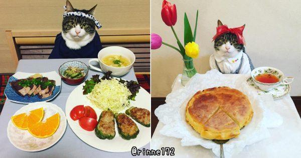 インスタの料理アカウント、ばっちりカメラ目線を決める猫が可愛すぎて料理どころじゃない
