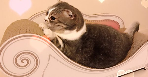 猫界の新トレンド!「カリカリーナ」を猫さんに貢ぐべし♡