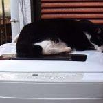 洗濯機の上から意地でもどかないネコと洗濯物を取り出すお母さんの戦い(笑)!!