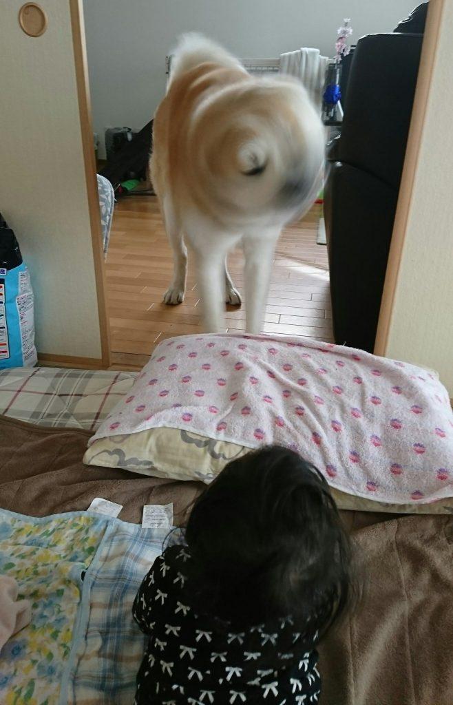 犬ドリル①