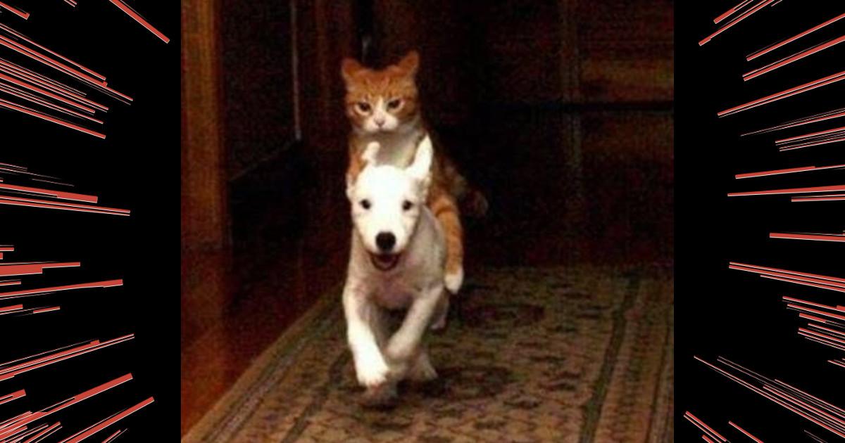 画像 【ハイよーワンちゃん!】相棒を完全に乗りこなす動物たち 10選