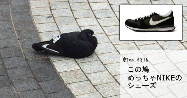 落とし物の靴かと思ったらハトォォ! 思わぬものに擬態する動物たち 7選