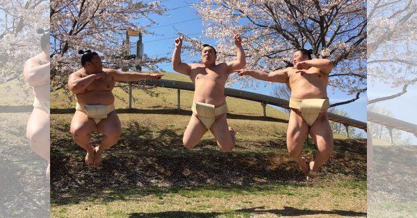 筋肉と桜のコラボ♪桜舞い散る中はしゃぐ力士の姿が最強に可愛い( ´)Д(` )