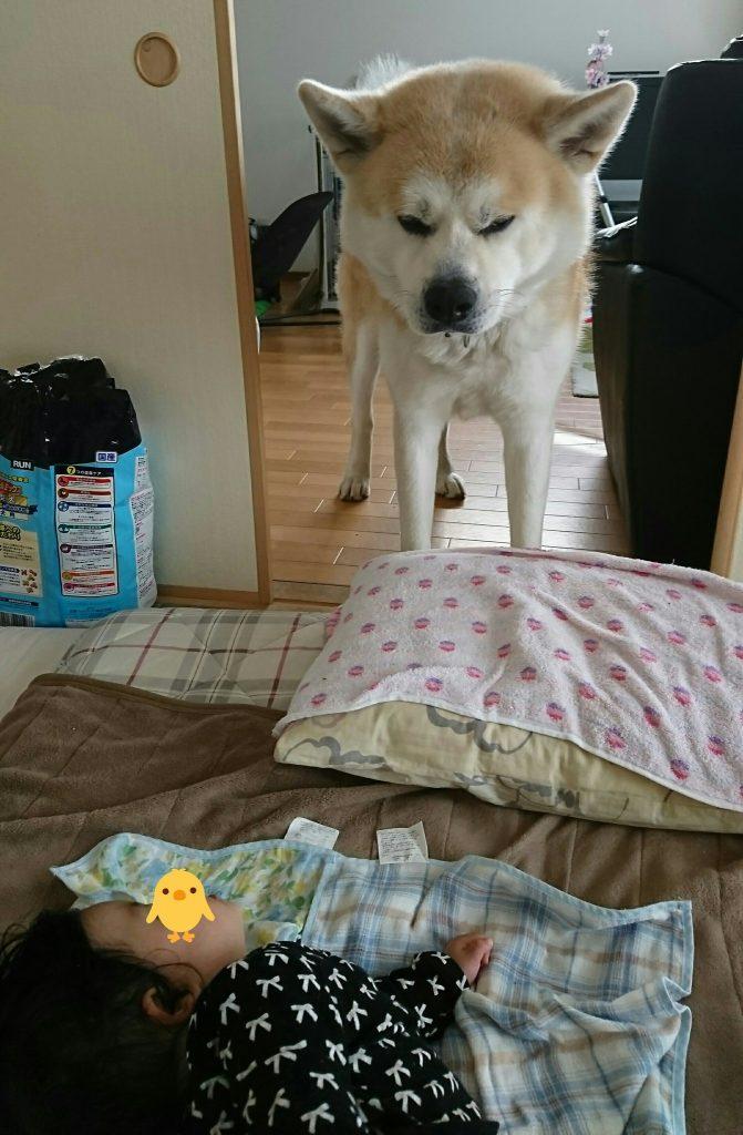 犬ドリル②
