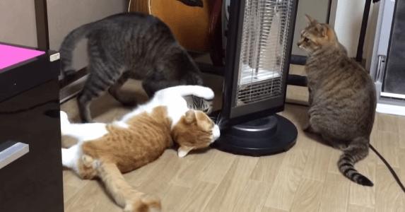猫 暖房1