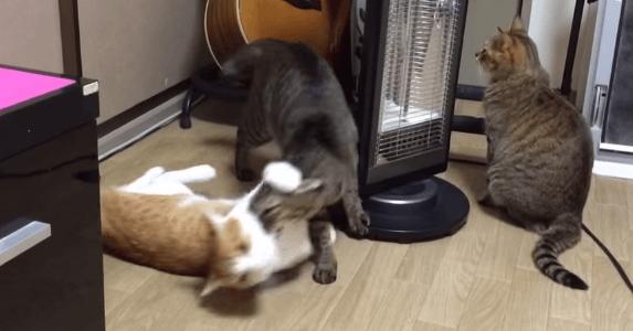 猫 暖房2