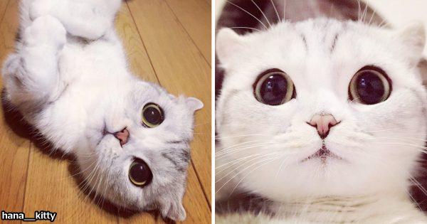 海外で人気爆発中!ロックオンされたら目がそらせない「おっきな瞳の猫」