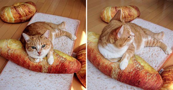 猫をダメにするクッション!「パン型クッション+ニャンコ」の威力たるや