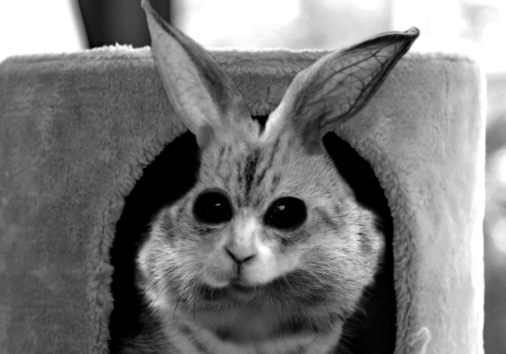 理論上最も可愛い動物