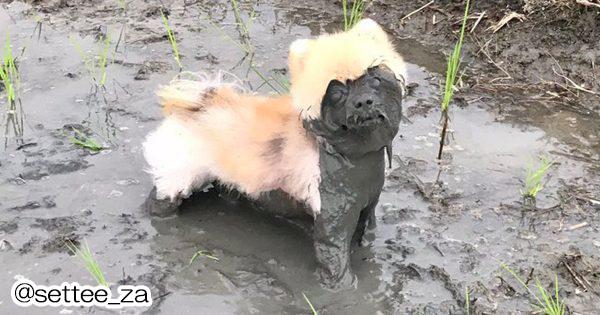 ちょっとあんた誰?! 泥だらけでまるで別犬になってしまったワンコ12選