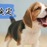 【犬検定】わんちゃんを愛する人ならチャレンジ!!