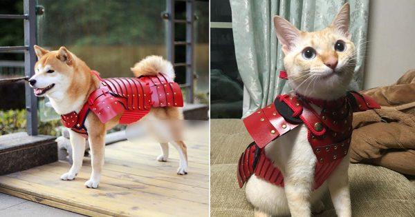 可愛すぎか!ペット専用のヨロイ誕生! 勇ましい鎧とユルイ表情のギャップにメロメロ