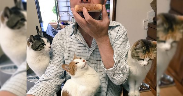 背後に感じる熱い視線。ニャンコにロックオンされた住職の朝食風景に猫好き悶絶