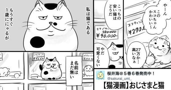 涙なしでは読めない!誰も欲しがらない「ちょっとおブスな猫」の漫画が感動的