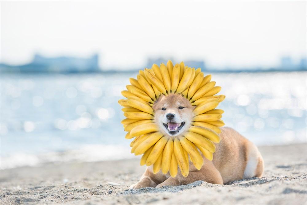 banadog_R