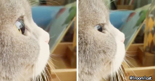 【天使の横顔】モフモフお口&ビー玉みたいな瞳が可愛すぎる猫に胸キュン