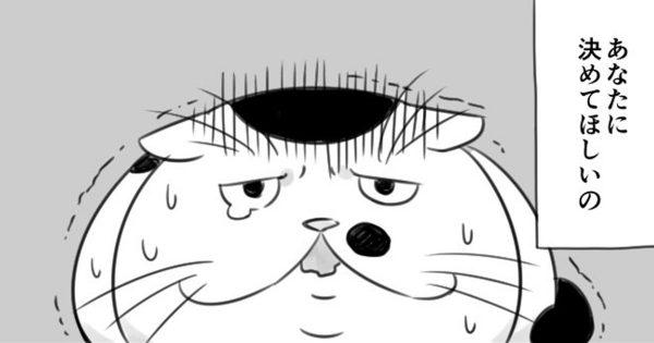 またまた涙なしには見れません!!「ちょっとおブスな猫」の続編に感動