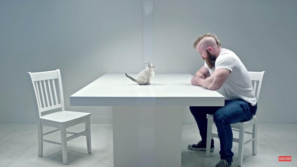 最強はどっちだ? 子猫VSコワモテ野郎のにらめっこ対決に癒される