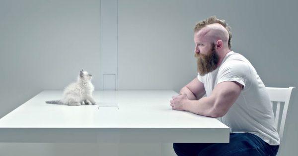 【猫、最強説】子猫VSコワモテ野郎のにらめっこ対決に癒される