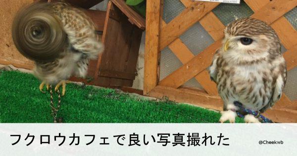 もはや原型をとどめていない。動物たちが偶然見せた愛嬌皆無なブレブレショット7選