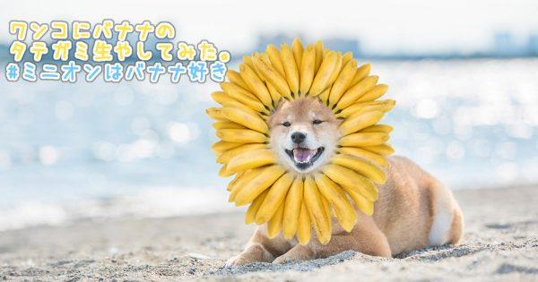 賞金は320,877円(ミニオンバナナ)!面白バナナのフォトコンテストが自由すぎて話題!