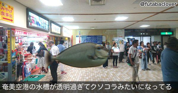 【沖縄に空飛ぶ魚、現る】100人が100人こう答えた「どう見てもコラ画像だろ!」7選