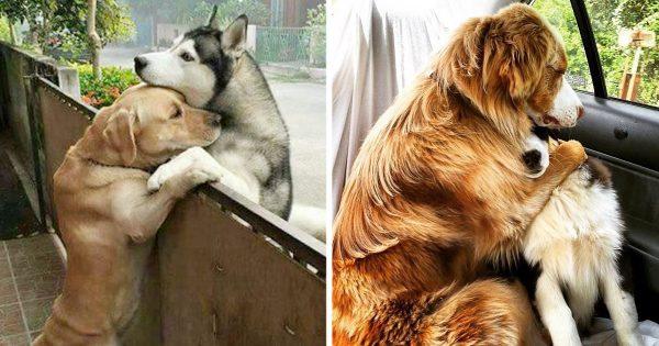愛に疲れたときこそ見てほしい。相思相愛な犬たちに心を洗われる12選