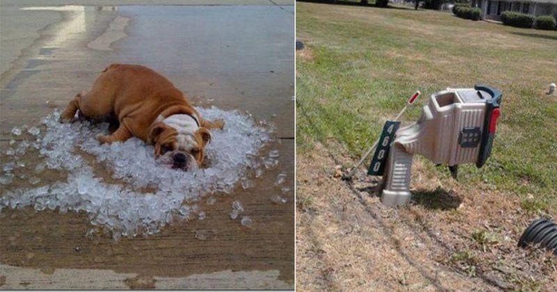 画像 熱中症にご注意を!暑さのせいでいろいろ溶け始めている15選