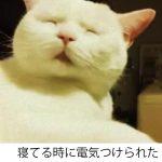 吹いたら寝てください!3秒で吹き出すネコのボケて11選