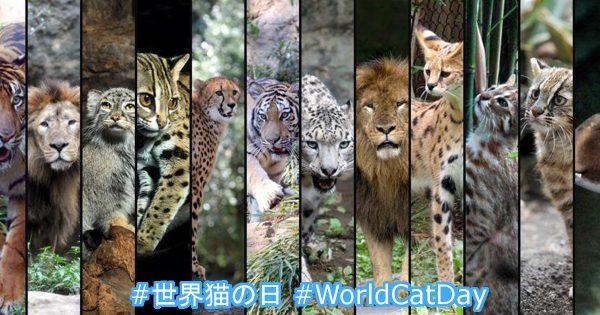 8月8日は「世界猫の日」! フリーダムすぎて猫になりたいと感じるワンショット17選