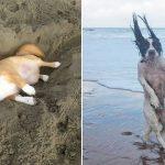 砂に触れると我を忘れる!海に行ってテンション爆上げしちゃった12匹の犬