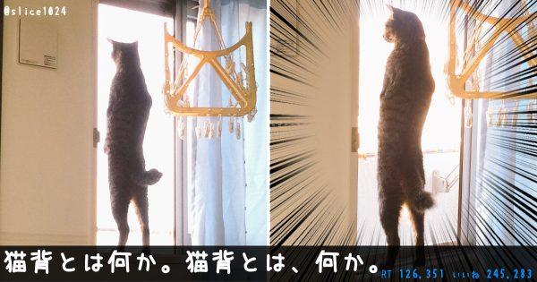 本当にネコなのか怪しい。ニャンコたちの表現力に無限の可能性を感じた瞬間11選