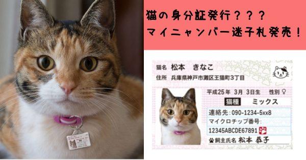 迷子の猫ちゃんを導く!IDカード型「マイニャンバー迷子札」が愛猫家を救う!!