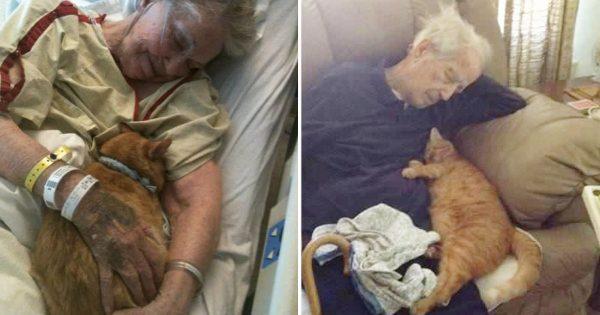 そばにいるよ。猫はおじいちゃん・おばあちゃんが大好きだという10の証拠