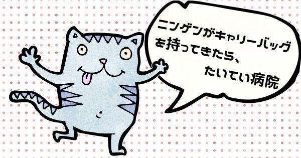 【ネコ専用記事】ニンゲンは共感せんでいい!ネコにしか共感できないこと21選