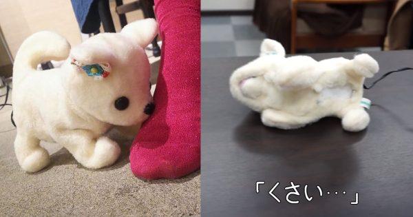 足がくさいと気絶する??犬型ロボット「はなちゃん」 製作者にお話を聞いてみた!!