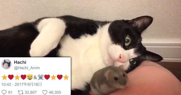 現代版トムとジェリー!猫とハムスターのフレンズが愛らしいけどちょっとヒヤヒヤする
