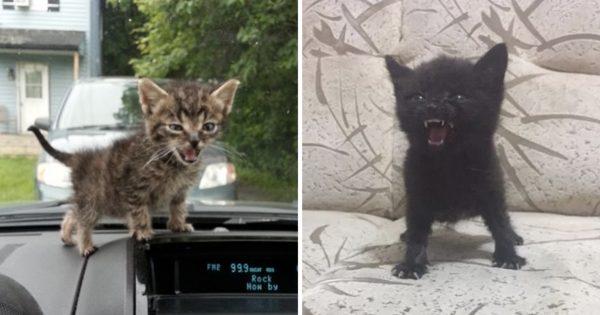 子猫だからって甘くみるなよ!大きくなったら立派な肉食動物になると夢みる12選