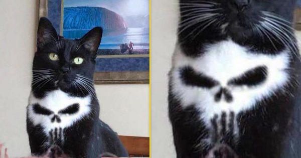 【ドクロやんけ!】もはや偶然じゃ説明できない!完全に○○な模様をもつ猫12匹