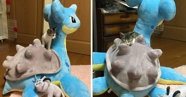 まさかのコラボ!突然家にやってきたポケモンと戯れるネコが可愛すぎる