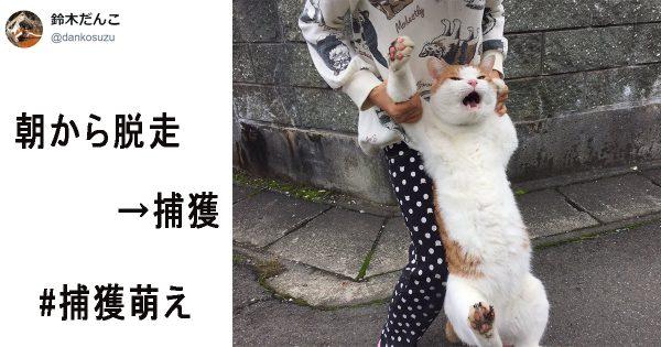 脱走した猫と飼い主の戦い『#捕獲萌え』の可愛さに悶絶する人続出!