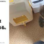 戦闘系アニメみたいに猫がスマホを襲う瞬間を激写!ペットのイタズラ6選
