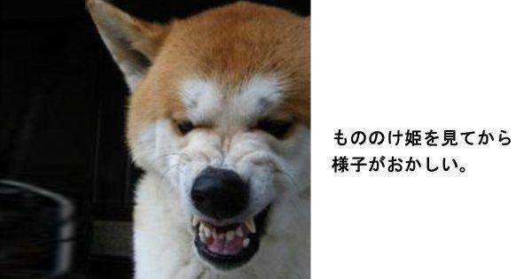 吹いたら寝てください!笑って癒される柴犬のボケて11選