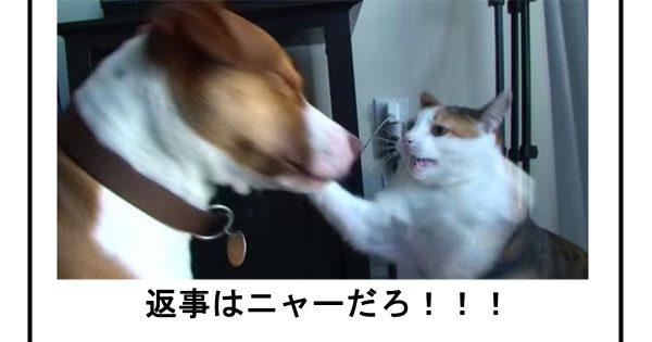 笑ったら帰宅してください!職場で見てはいけない猫のボケて11選
