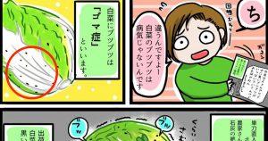 主婦必見!白菜に付いている「黒い斑点」の正体を知ってますか?