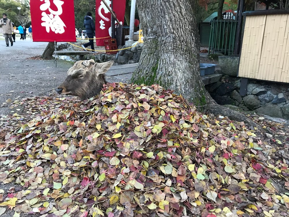 落ち葉に包まれる鹿